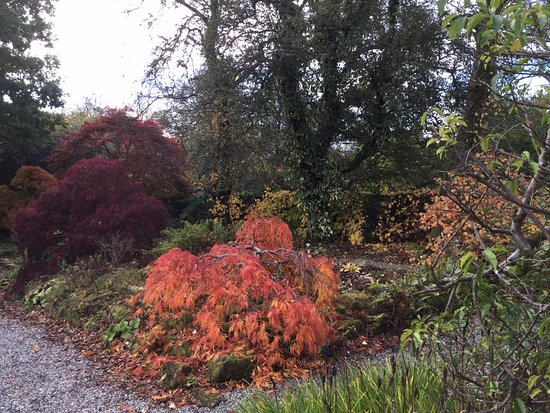 Helensburgh, UK: Autumn colours at Hill House