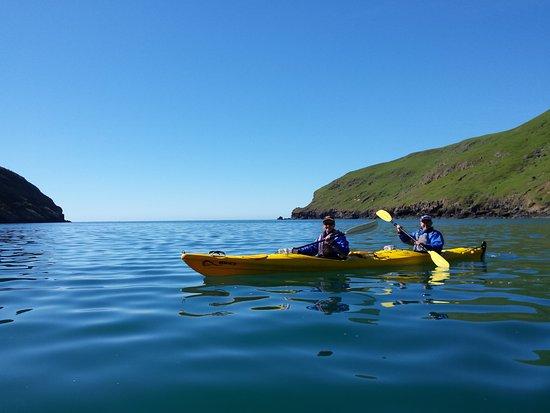 Pohatu Penguin Habitat: Kayaking in Flea Bay