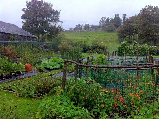 Acharacle, UK: L'orto della casa. Qui Stella prende prende le verdure e le spezie della sua cucina