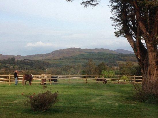 Glencar, أيرلندا: Horses outside Glencar House