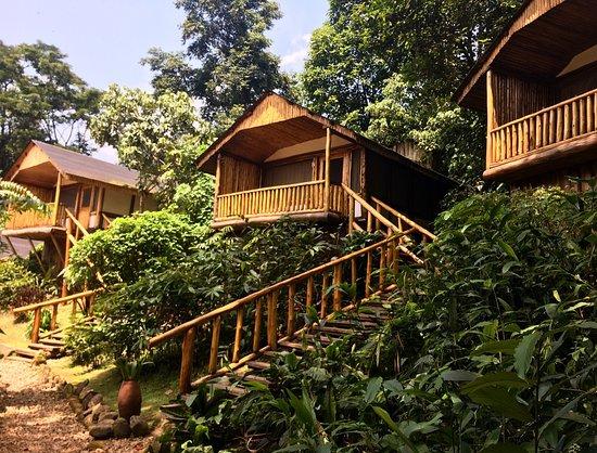 Bwindi Impenetrable National Park, Uganda: Buhoma Lodge