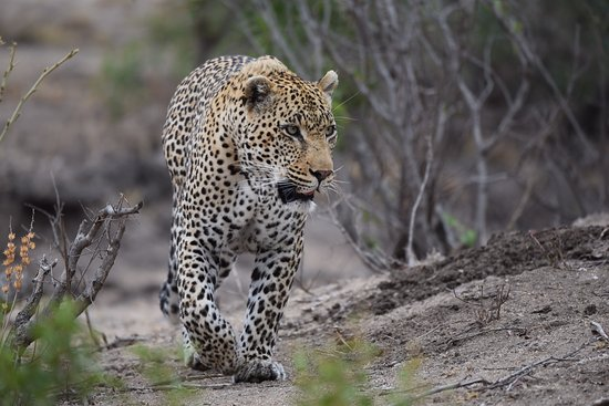 Leopard Hills Private Game Reserve: photo0.jpg