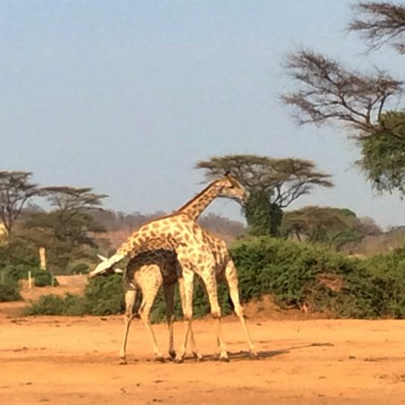 Imbabala Zambezi Safari Lodge: Game Drive