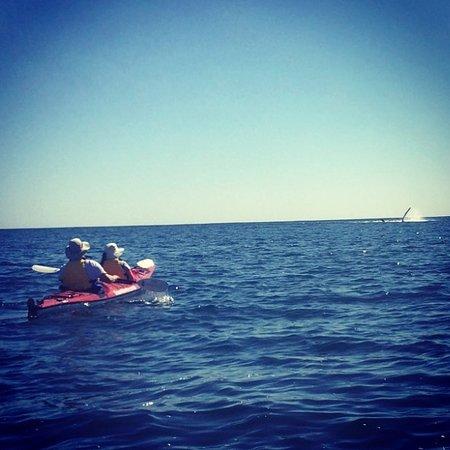 Caloundra, Australia: Whale season: August, September, October