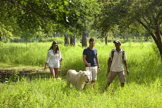 Mauritius: Walk with lions in Casela World of Adventures
