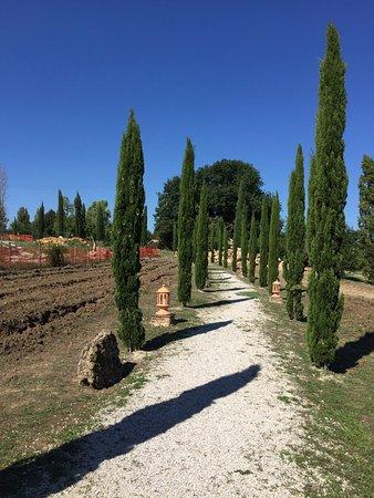 Montemerano, Italia: viale con cipressi