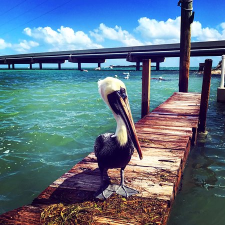 Lake Monroe, Flórida: photo1.jpg