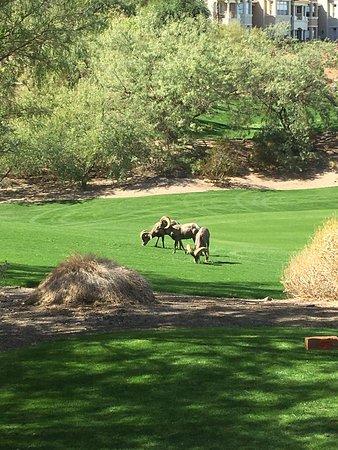 Cascata Golf Course: photo0.jpg
