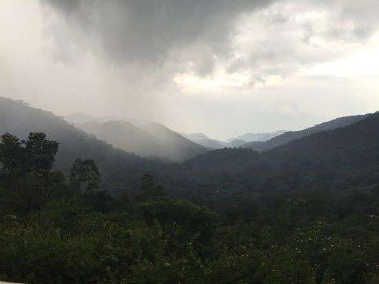 Bwindi Impenetrable National Park, Uganda: photo0.jpg