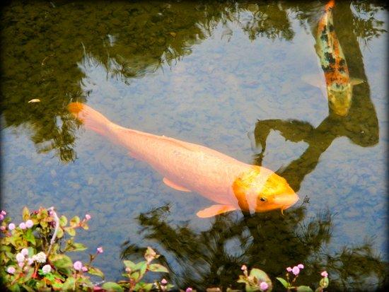 San Marino, CA: Japanese Garden
