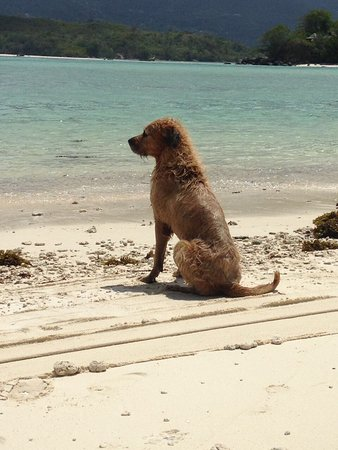 Victoria, Seychelles: Teddy's Glass Bottom Boat