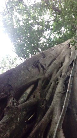 Rincon de La Vieja, Costa Rica: IMG_20160609_112754_large.jpg