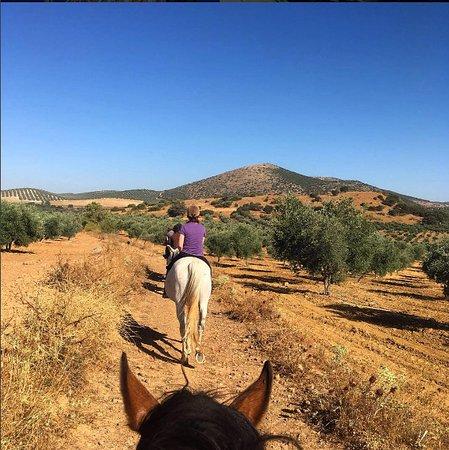 Archidona, İspanya: Through the olive groves on horseback