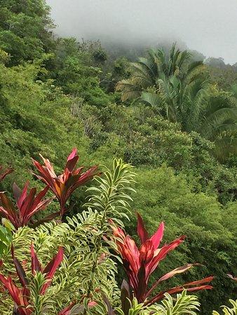 TikiVillas Rainforest Lodge: photo0.jpg