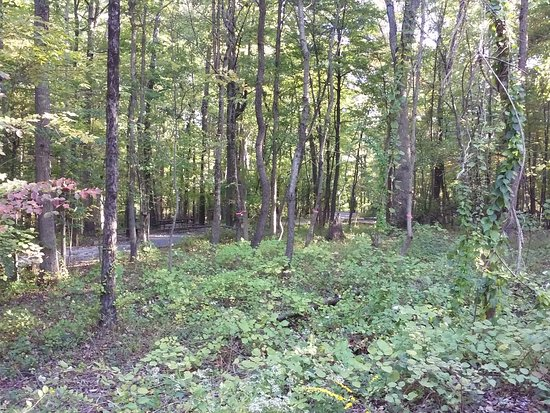 Ellicott City, MD: The woods were full of little creatures including chipmunks and cottontail rabbits.