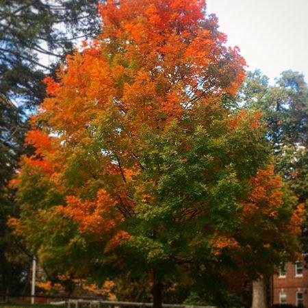 Concord, Μασαχουσέτη: Beautiful fall foliage