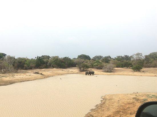 Tissamaharama, ศรีลังกา: Elephants
