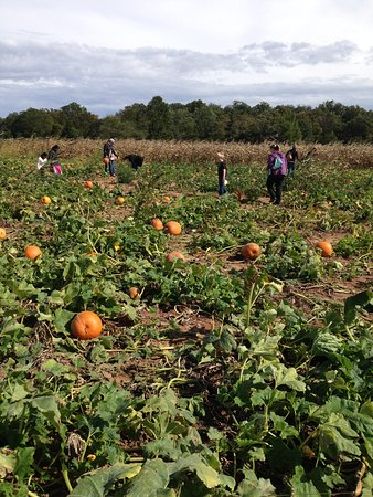 Montgomery, PA: Freddy Hill Farms Pumpkin Patch