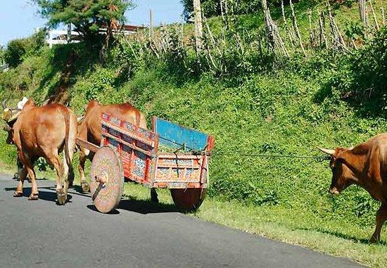 San Antonio De Belen, Costa Rica: Oxcart