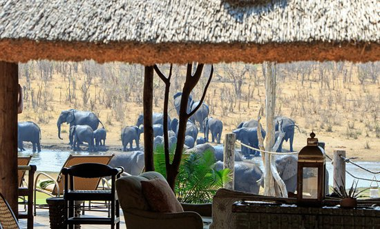 Hwange, Ζιμπάμπουε: Elephants as seen through the lounge area