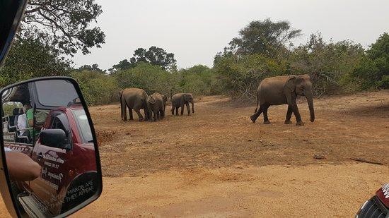 Tissamaharama Safari Advisor- Day Tours
