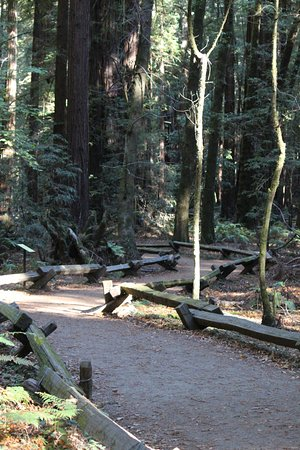 Guerneville, Califórnia: A view of the trail, very level ground