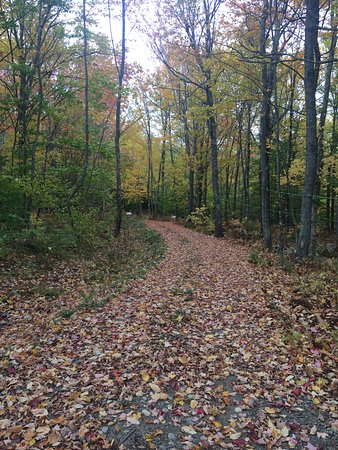 Washington, ME: walking path through the maple trees
