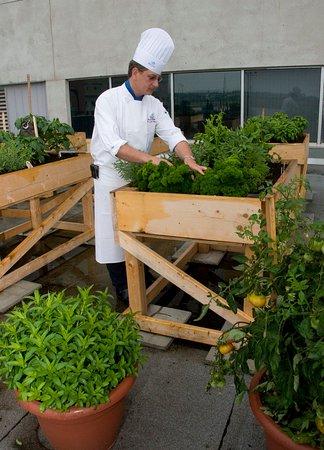 Delta Beausejour Hotel: Chef Garden