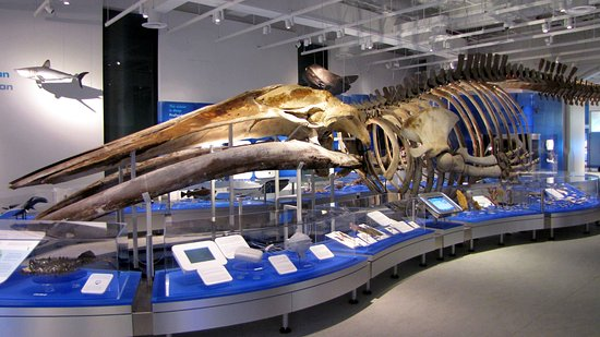 The Metcalfe Hotel: Visit the newly renovated Canadian Museum of Nature