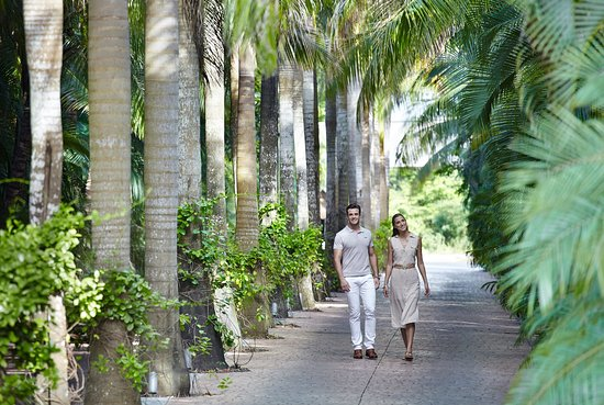 Presidente Inter-Continental Cozumel Resort & Spa: Tree-lined Entrance