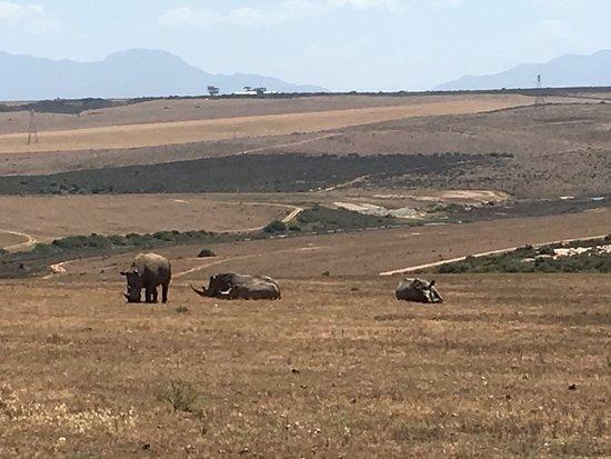 Albertina, Sudáfrica: photo1.jpg