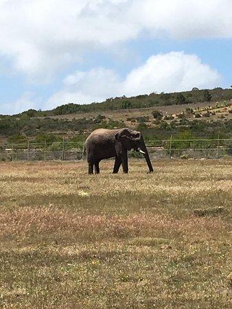 Albertina, Sudáfrica: photo3.jpg
