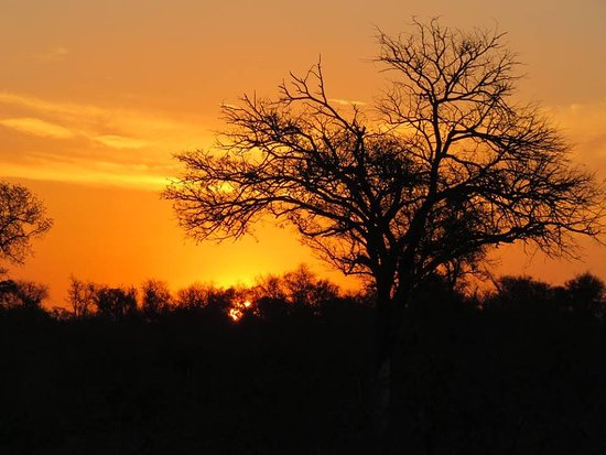 Londolozi Private Game Reserve, África do Sul: Amazing sunset.