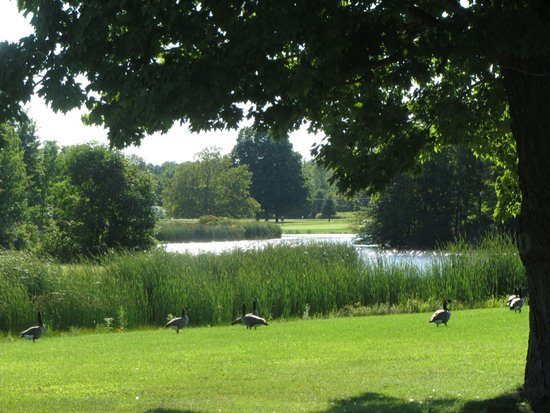 North Kingsville, OH: The Lake And Geese at Village Green