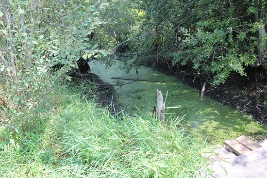 Wainfleet, كندا: Part of the bog
