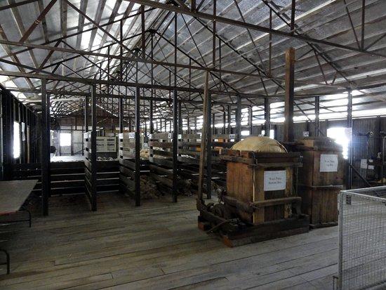 Rockhampton, Австралия: Kianga Shearing Shed