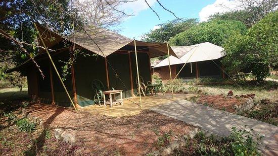Mara Springs Safari Camp: DSC_0740_large.jpg