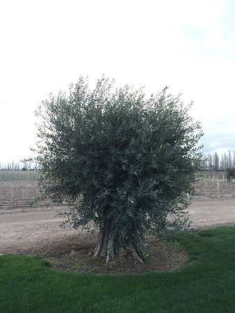 Lujan de Cuyo, Αργεντινή: Bodega Matervini