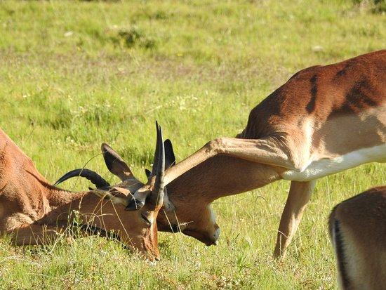 Addo Elephant National Park, Sudáfrica: Natur Pur!