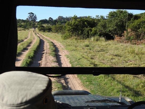 Addo Elephant National Park, Sudáfrica: Straße