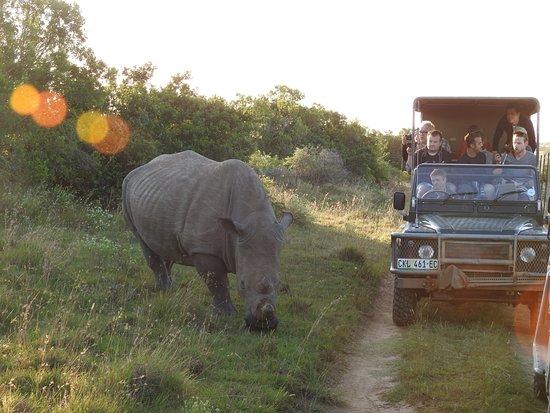 Национальный парк слонов Аддо, Южная Африка: Nashorn