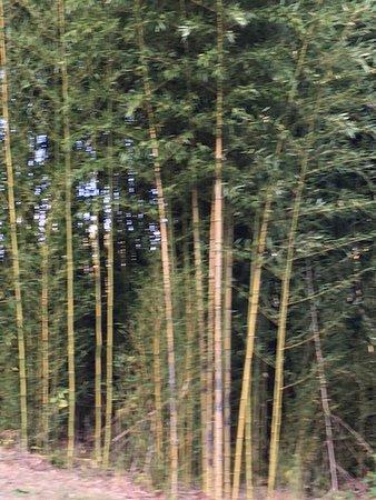 Lynchburg, VA: Bamboo Forest
