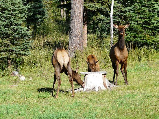 Polebridge, MT: Other Guests....