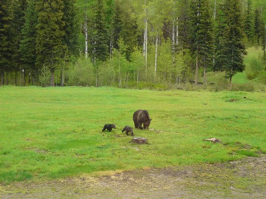 ‪‪Polebridge‬, ‪Montana‬: Mama and cubs‬