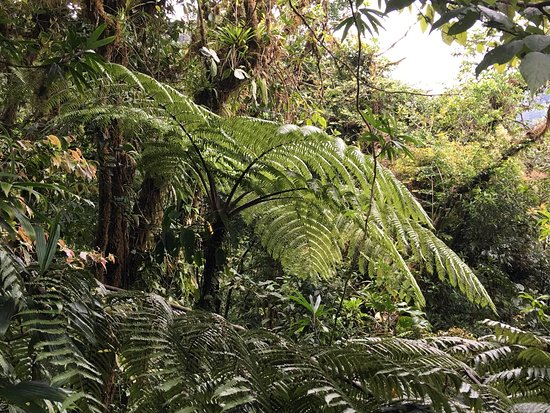 Monteverde Cloud Forest Reserve, Κόστα Ρίκα: photo3.jpg