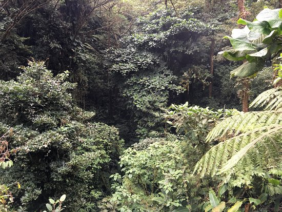 Monteverde Cloud Forest Reserve, Κόστα Ρίκα: photo5.jpg