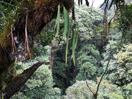 Monteverde Cloud Forest Reserve, Κόστα Ρίκα: photo7.jpg