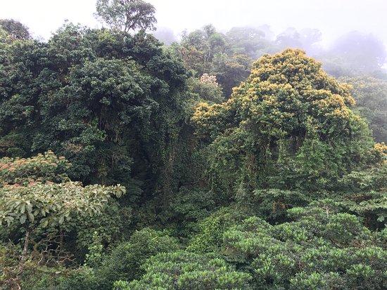 Monteverde Cloud Forest Reserve, Κόστα Ρίκα: photo8.jpg