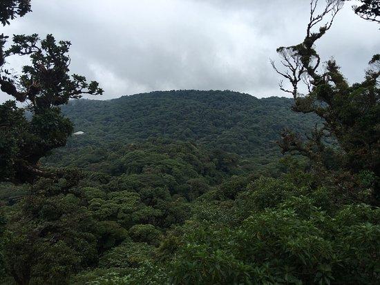 Monteverde Cloud Forest Reserve, Κόστα Ρίκα: photo9.jpg