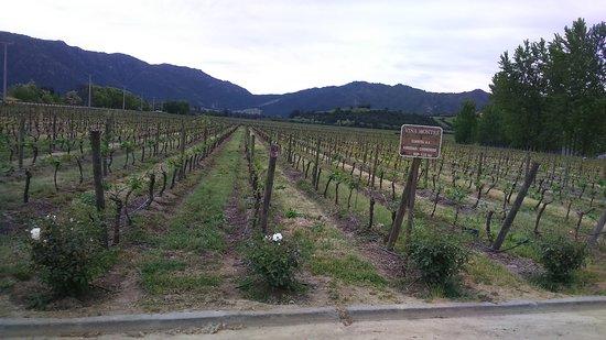 Santa Cruz, Chili : DSC_1116_large.jpg